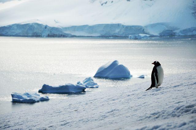 Voyage Au-delà du cercle polaire antarctique
