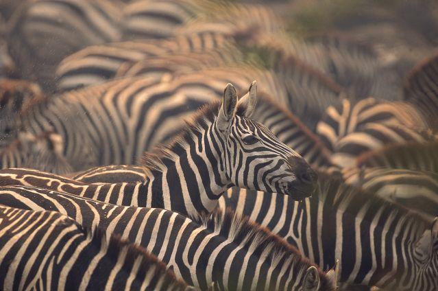 Voyage Safaris privés à Chobe, Savuti et Moremi