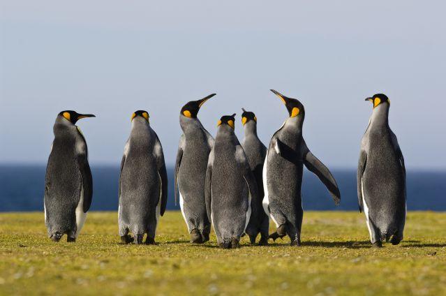 Voyage Mystérieuse Patagonie, de Pali Aike au Fitz Roy