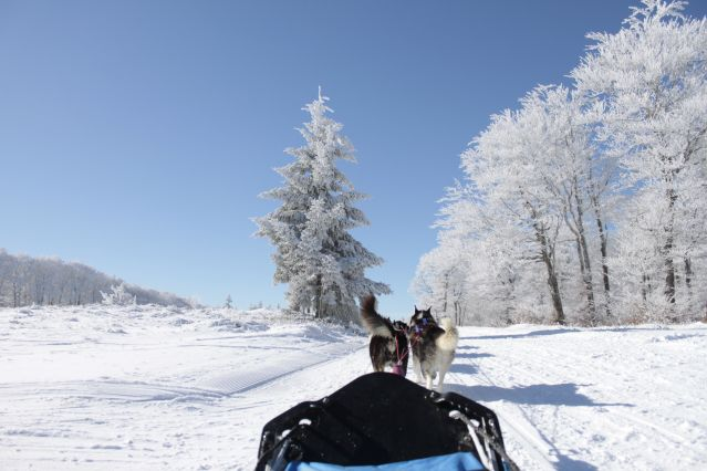 Aventures hivernales sur le plateau de l'Aubrac