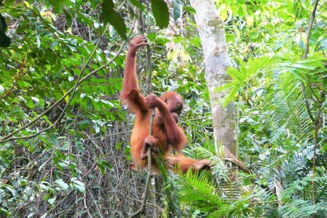 Multi-activités sur l'île de Sumatra