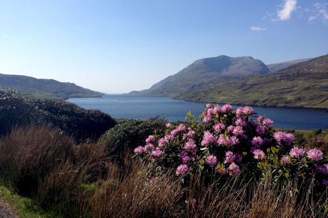 Wild Atlantic Way : la côte sauvage irlandaise