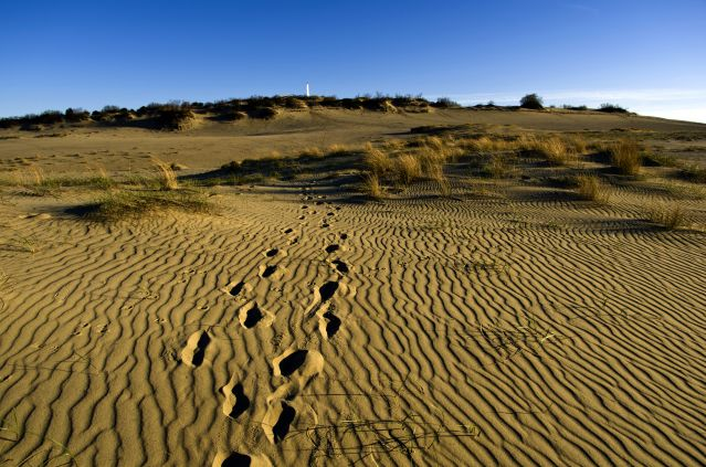 Voyage Parcs nationaux et patrimoine des pays baltes