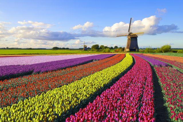 Voyage Vélo et péniche, les tulipes au fil de l'eau