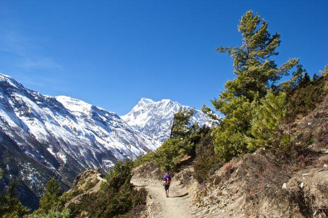 Voyage Tour des Annapurnas