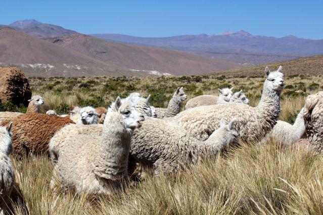 Voyage Les incontournables du Pérou