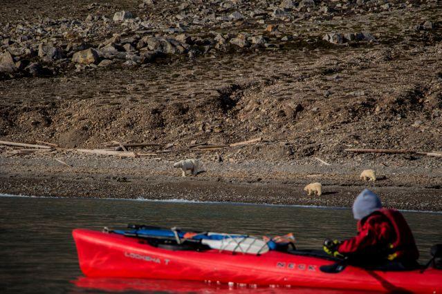 Voyage Kayak en baie du Roi
