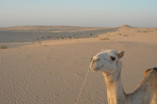 Voyage Villages, dunes et chameliers en herbe