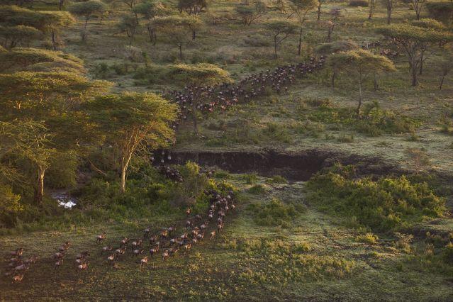 Mwiba Lodge - Serengeti - Tanzanie