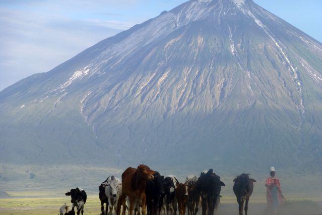 Berger et son troupeau de vaches - Tanzanie