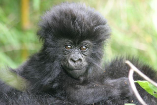 Voyage Forêts impénétrables et safari
