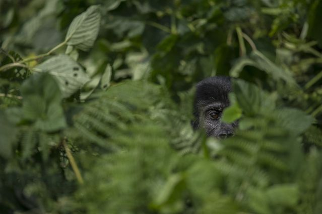 Voyage Objectif Primate avec Eric Le Boulch