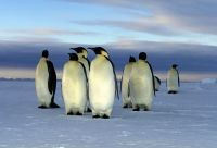 Odyssée antarctique