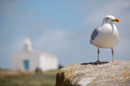 Parenthèse bien-être en Vendée