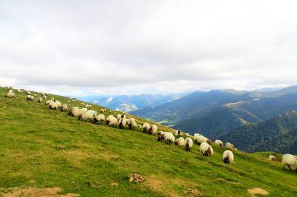 Terroirs du Pays basque