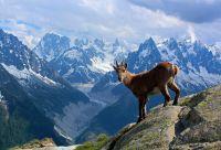 Du Léman au Mont-Blanc (GTA étape 1)