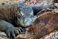 De Bornéo à Komodo : croisières en terres sauvages