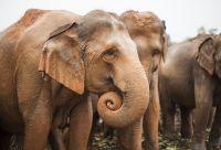 Aventures au pays des éléphants