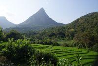 De la péninsule de Jaffna aux monts Knuckles