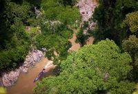 Immersion dans la jungle de Bornéo
