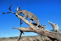 Traversée de la Namibie aux chutes Victoria