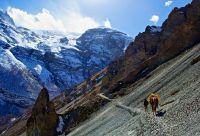 Grand tour des Annapurnas