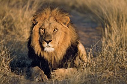 Safari d'antan